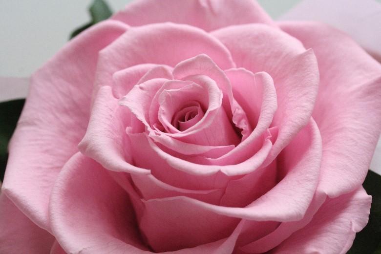 母の日花ギフト贈り物お母さん